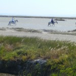 Camargue tour with Classic Bike Esprit
