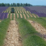 Motorcycle tour to the lavender fields of Provence
